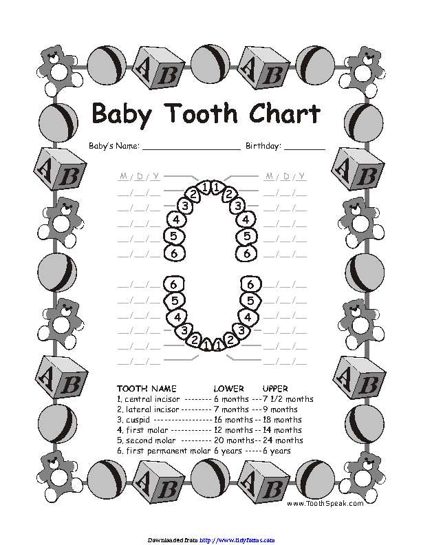 Baby Teeth Chart 2