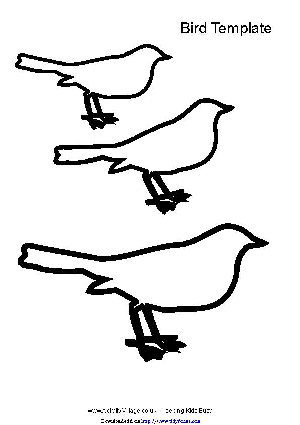 Bird Template 2