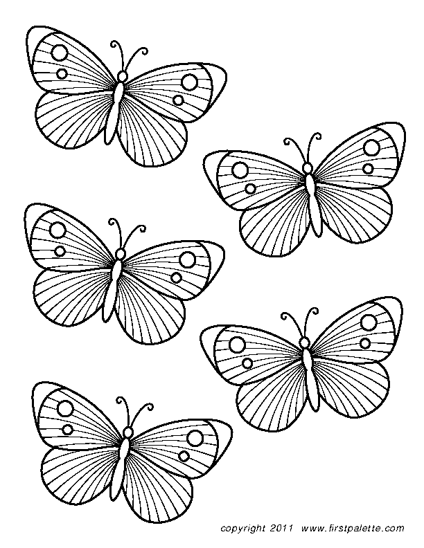 Butterfly Template 3
